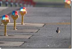 apch bird